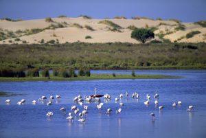 Donana National Park in Spain
