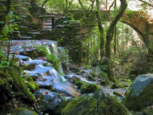 Forests Eume in Galicia